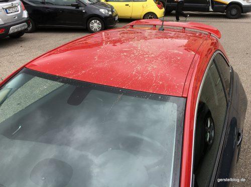 Marderspuren auf dem Autodach