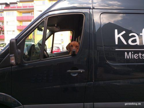Dienstwagenhund